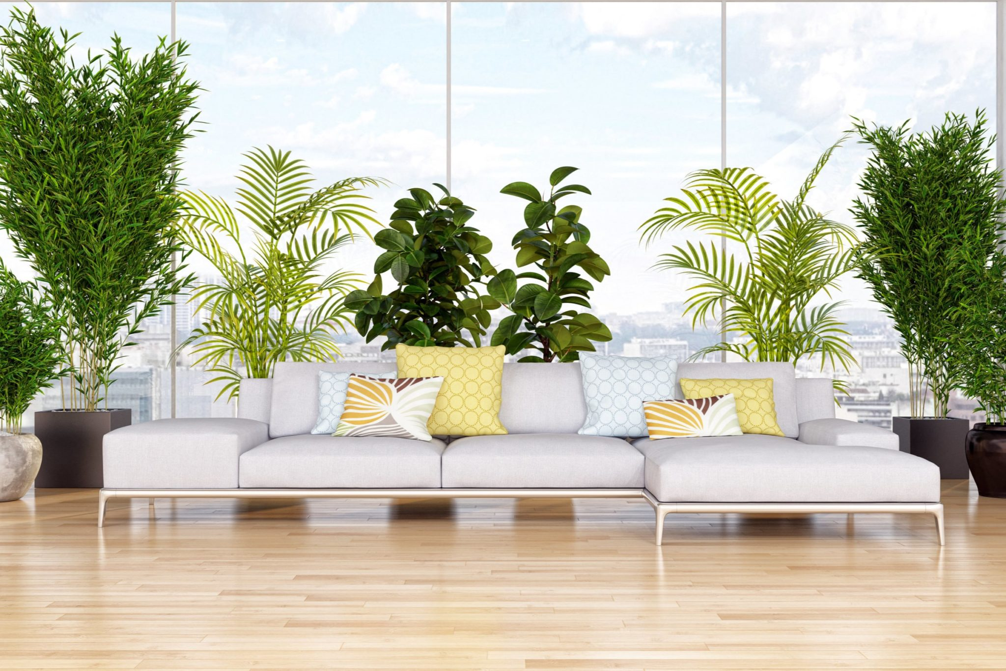 Indoor Plants in the Office: A Breath of Fresh Air