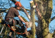professional-tree-service