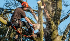 professional tree service Tree Removal Company