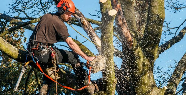 professional-tree-service